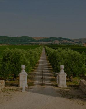 ITALIAN-CULINARY-TOURS